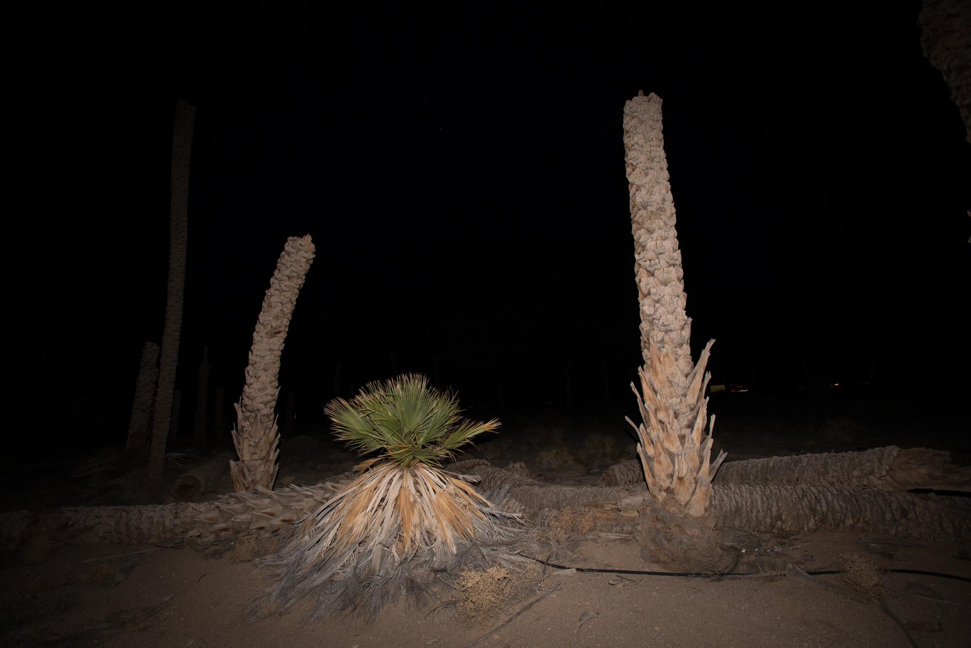 Desert Center Palm Circle, backdrop for performance