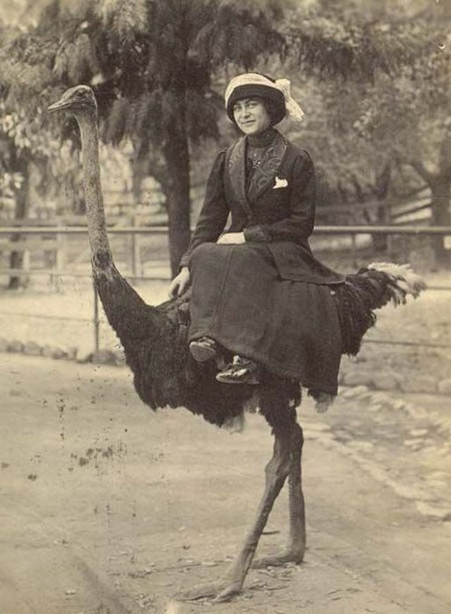 A Victorian lady and her Ostrich.jpg